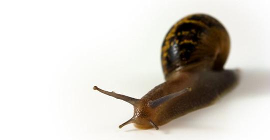 land_snail_183855